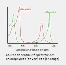 Chlorophyles.jpg