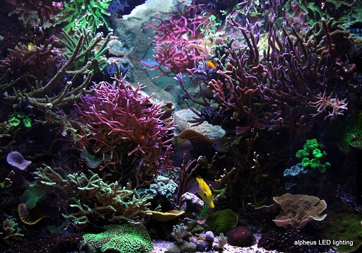 aquarium JLC sous LED alpheus