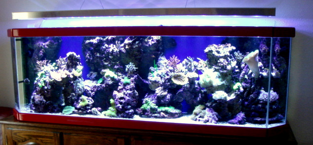 Aquarium de jean-Marc 400W LED