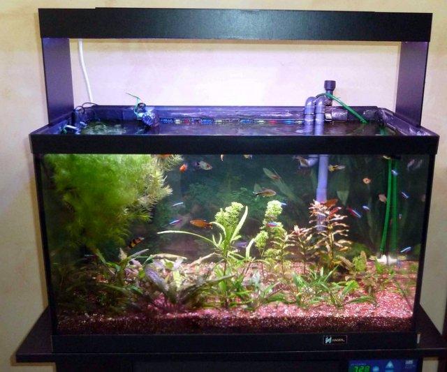 Ampoules led pour biotopes artificiels exemple de realisations for Aquarium 50 litres occasion