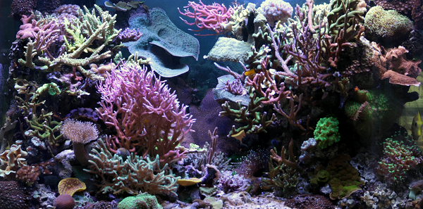 Desktop background fond d 39 cran anim aquarium gratuit for Fond ecran aquarium