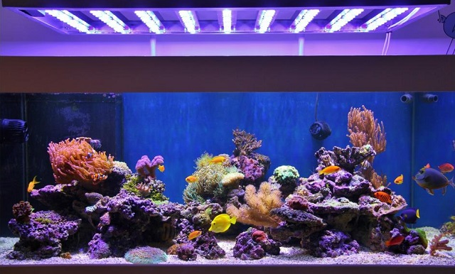 Aquarium de Florent 300W LED